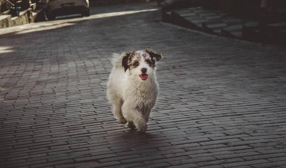 perro corriendo
