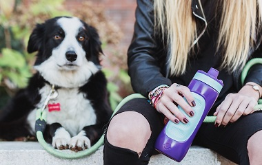 botellas orina perros