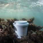 Tazas take away compostables para personalizar